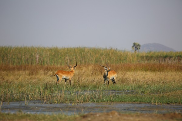 Lategan Safaris - Gallery